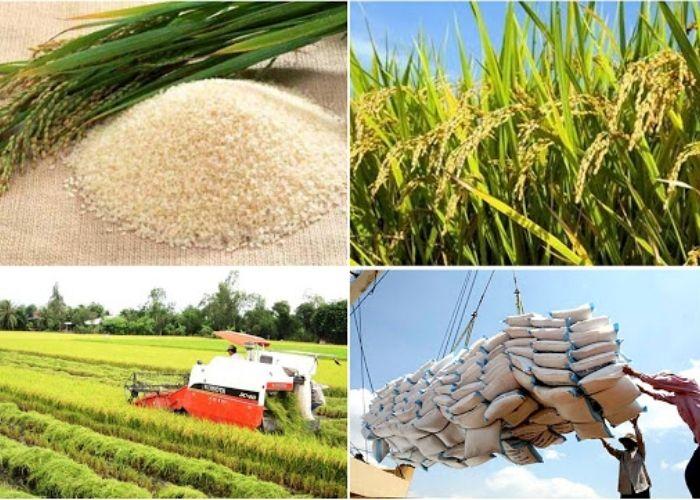xuất khẩu nông sản  - gạo